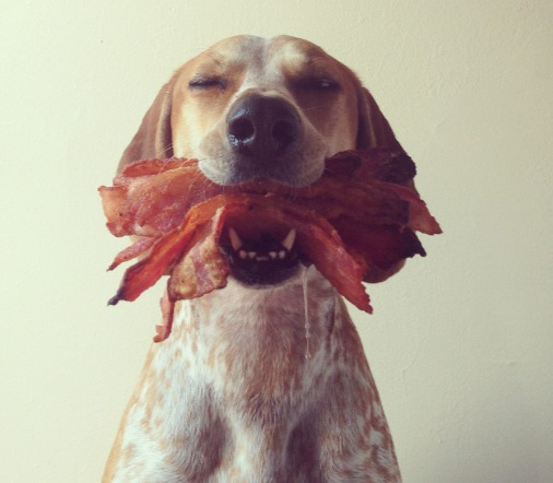 Dog Who Loves Bacon
