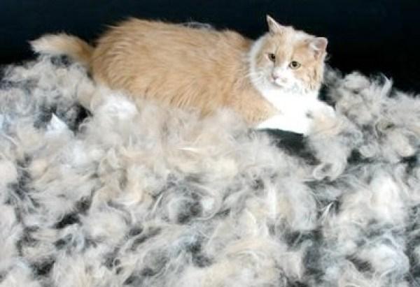 Funny Cats Hair