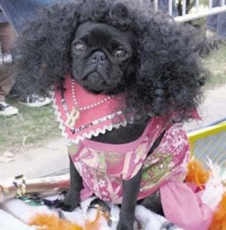 Top 10 Not So Natural Dogs With Afro Hairstyles