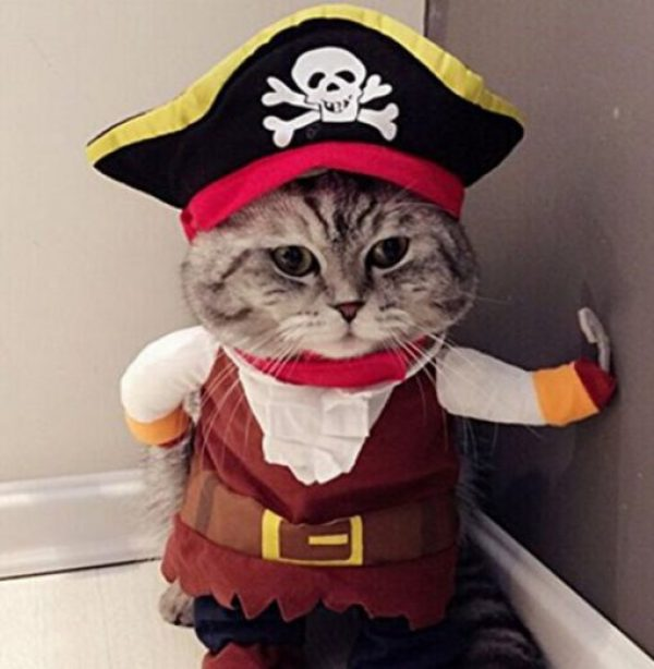 Cat in a Pirate Costume