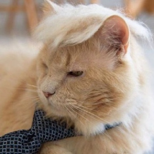Top 10 Politically Incorrect Cats Who Look Like Donald Trump