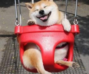 Top 10 Super Swinging Dogs In Swings