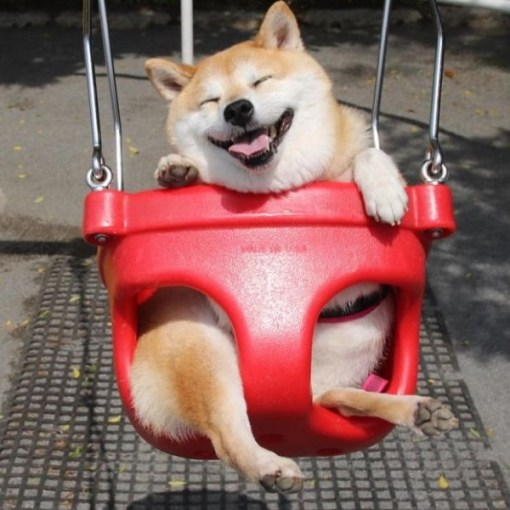 Top 10 Super Swinging Dogs In Swings