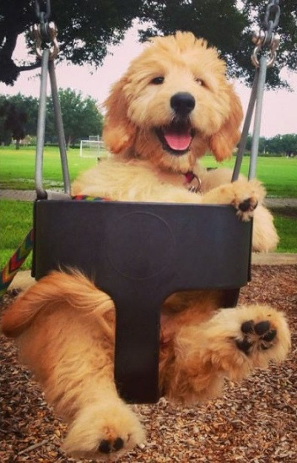 Dog in Playground Swing