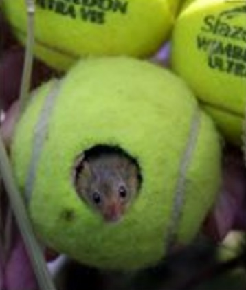 Tennis Balls Transformed Into Mouse Homes