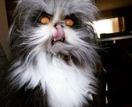 Creepy Looking Cat