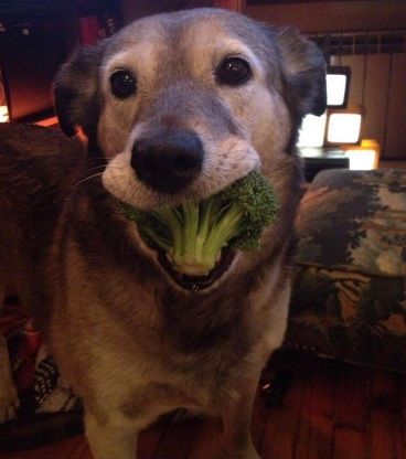 This Dog Loves Vegetables