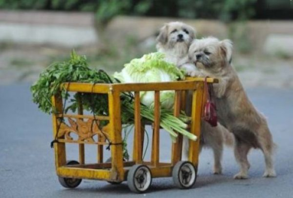 These Dogs Love Vegetables