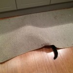 Top 10 Perfectly Timed Pictures of Funny Cats Tails