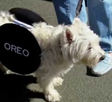 Oreo Cookie Dog Costume Fail
