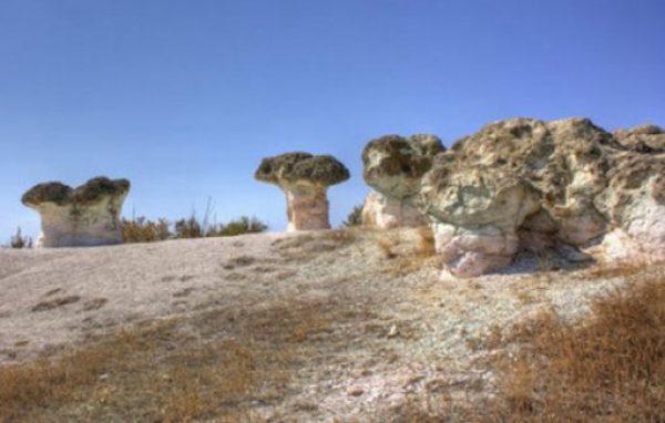 Stone Mushrooms, Beli Plast