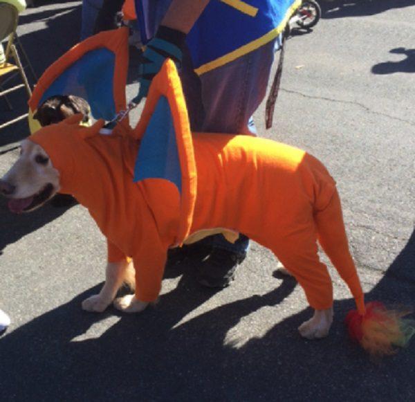 Dog Dressed as Charizard