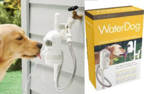 Automatic Dog Fountain