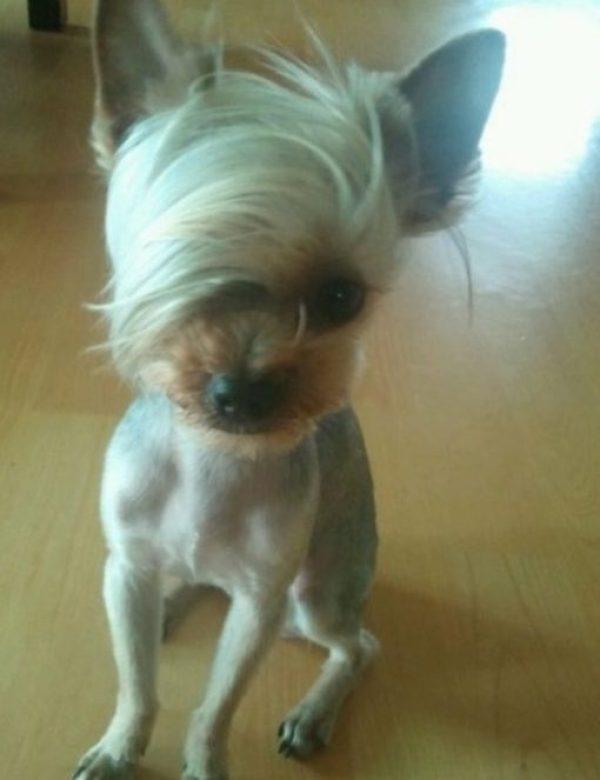 Dog Having A Bad Hair Day