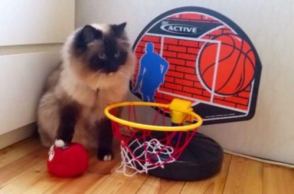Cat Playing Basketball
