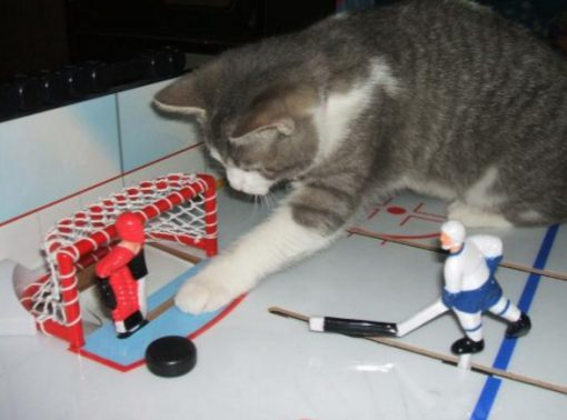Cat Playing Hockey