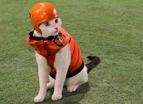 Cat Playing American Football