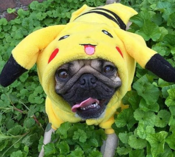 Dog Dressed as Pikachu