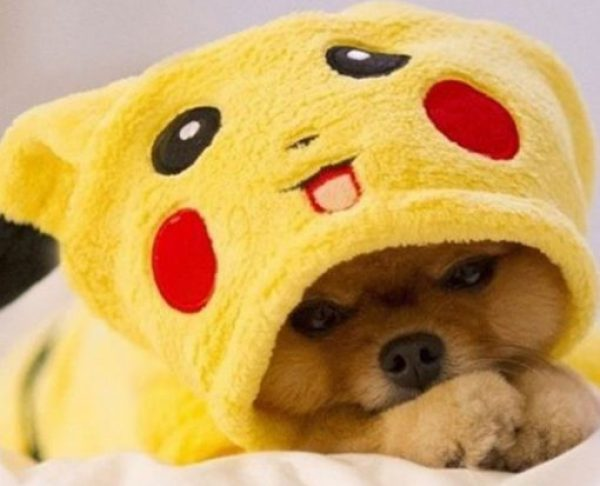 Ten Dogs in Pokémon Costumes That Look Cute Enough to Catch!