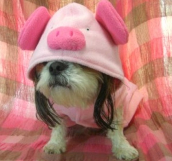 Dog Dressed as a Pig
