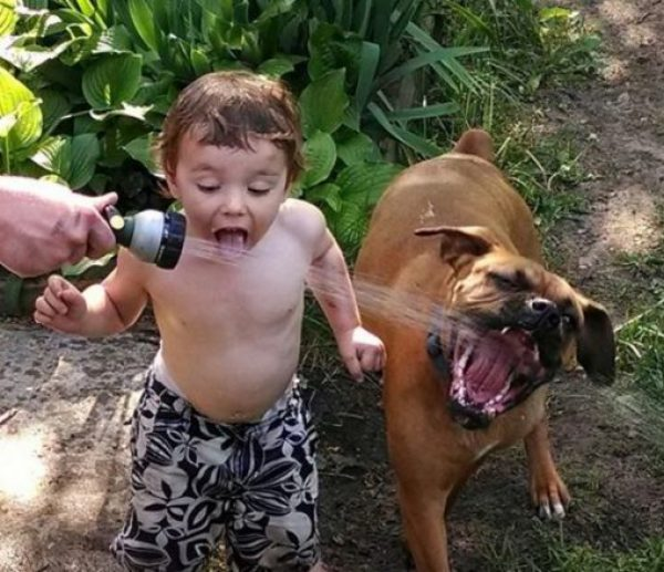 Dogs Copying Kid