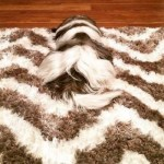 Top 10 Dogs Who Have Mastered the Art of Camouflage