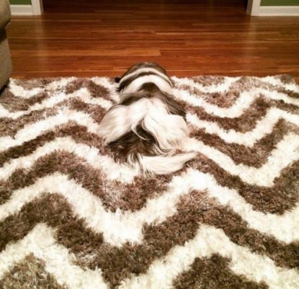 Can you spot the dog?