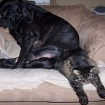 Top 10 Big Bully Dogs Picking on Cats