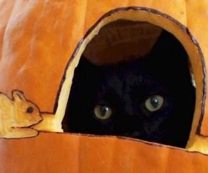 Top 10 Halloween Horror Cats In Pumpkins