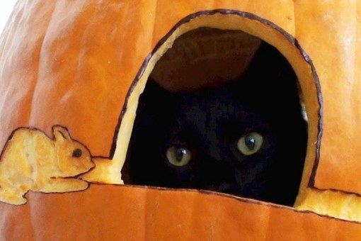 Top 10 Halloween Horror Cats In Pumpkins