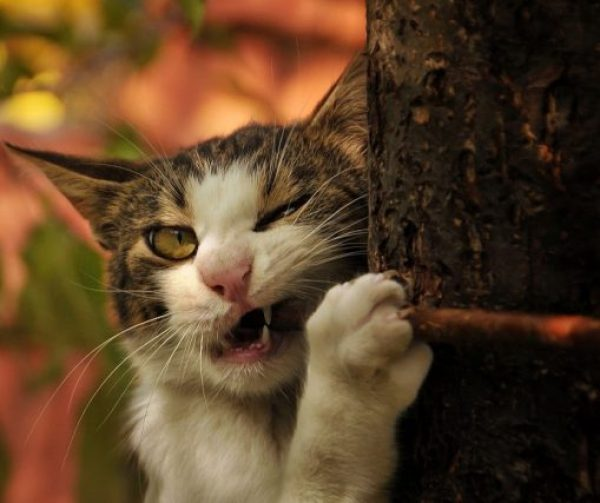 Cat Eating a Stick