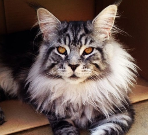The Worlds Most Beautiful Cat
