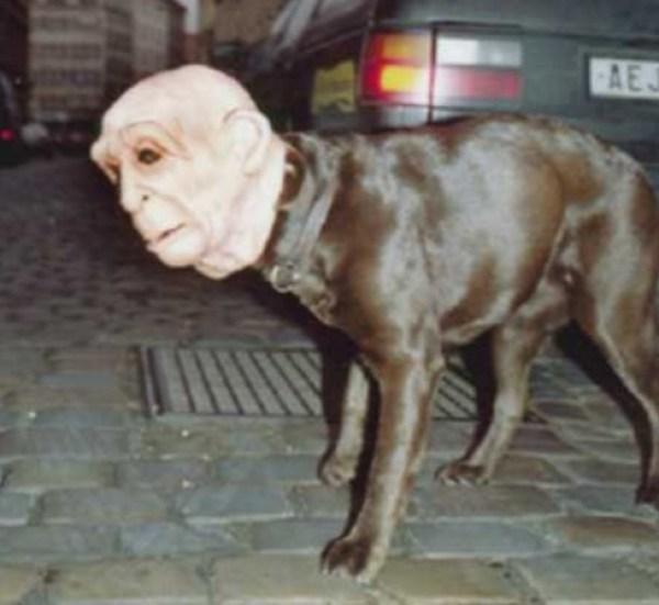 Scary Dog Costume