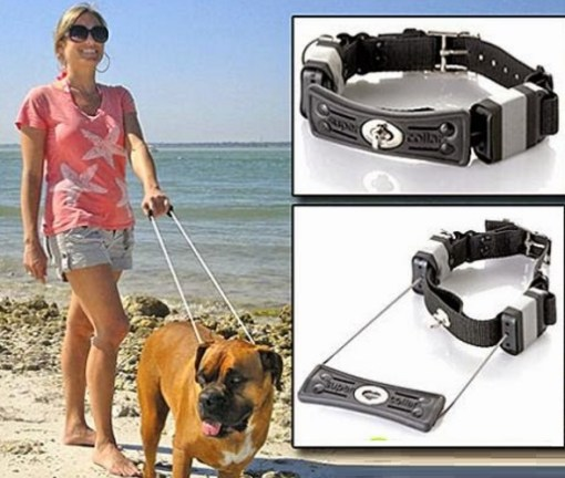 Built-in Leash Dog Collars