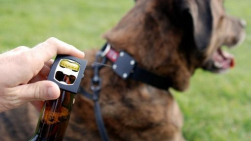 Bottle Opener Dog Collar