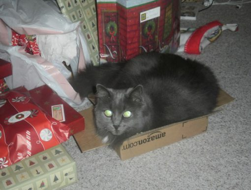 Cat Unwrapping Christmas Presents