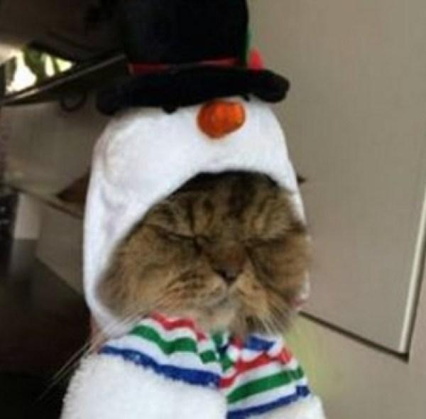 Snowman Cat