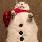 Top 10 Cold as Ice Snowman Cats That Won't Melt