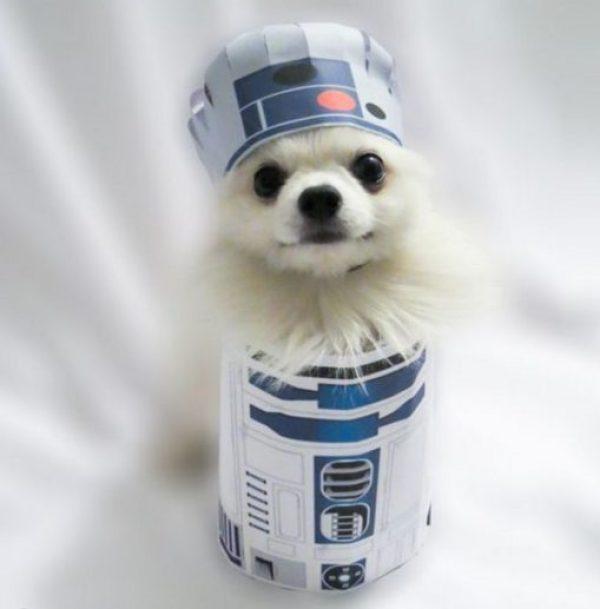 Dog Dressed as R2-D2