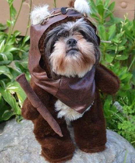 Dog Dressed as an Ewok