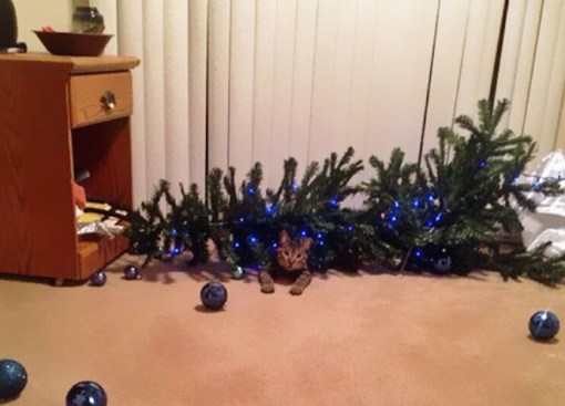 Cat Destroys Christmas Tree