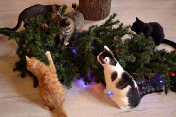 Cats Destroys Christmas Tree