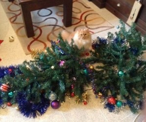 Top 10 Grinch Loving Cats That Destroyed Christmas
