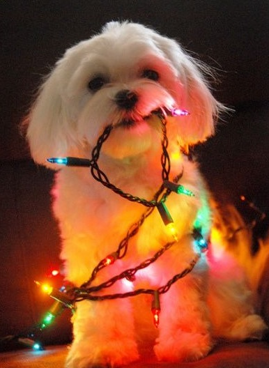 Dog Destroys Christmas Tree