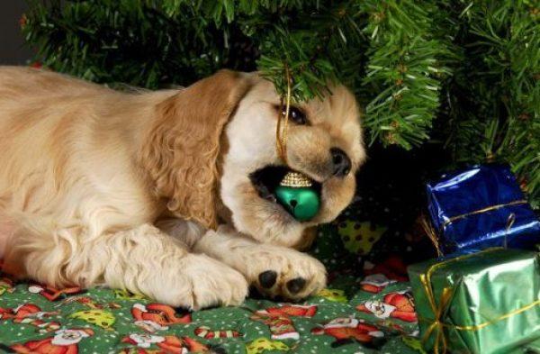 Dog Destroys Christmas Tree
