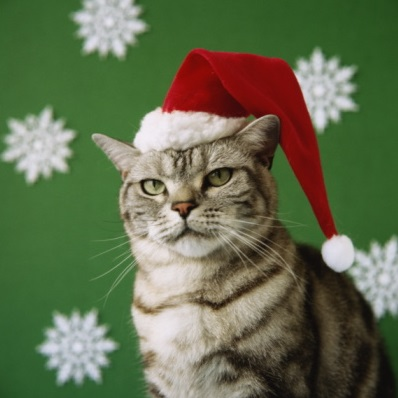 Santa Hats for Cats