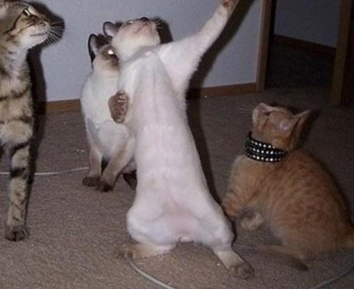 Cat He S Doing That Dance