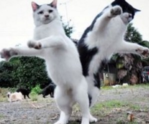 Top 10 Cats Dancing At the New Years Eve Party