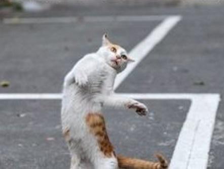 Cat Dancing Like Michael Jackson