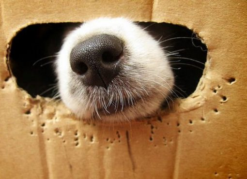 Top 10 Comfortable Looking Dogs In Boxes